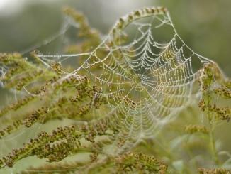 zirneklu tikls